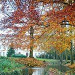 Rencontres buissonnières - L'automne