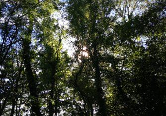 Rencontres buissonnières - Forêt abbaye Cîteaux